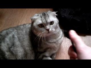 Кот и расческа #2